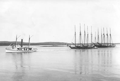 Tug Bismark towing lumber schooners